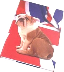 Letts 415 906400 Блокнот Flexi Bulldog, красный
