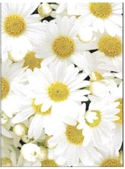 Letts 415 906300 Блокнот Flexi Daisy, белый